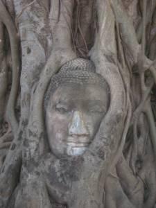 ワット・プラ・マハタートにある                   樹木に取り込まれた仏像