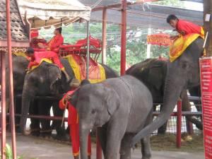 アユタヤは象に乗っての観光も有名