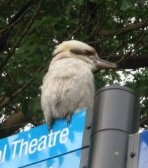 動物園の鳥ではなく、普通に看板に留まっている野生の鳥